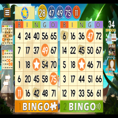 Bingo Lottery Review – The Expert Ratingsand User Reviews