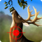Jungle Deer Hunting Game 2016